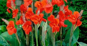 Ako správne pestovať tulipány